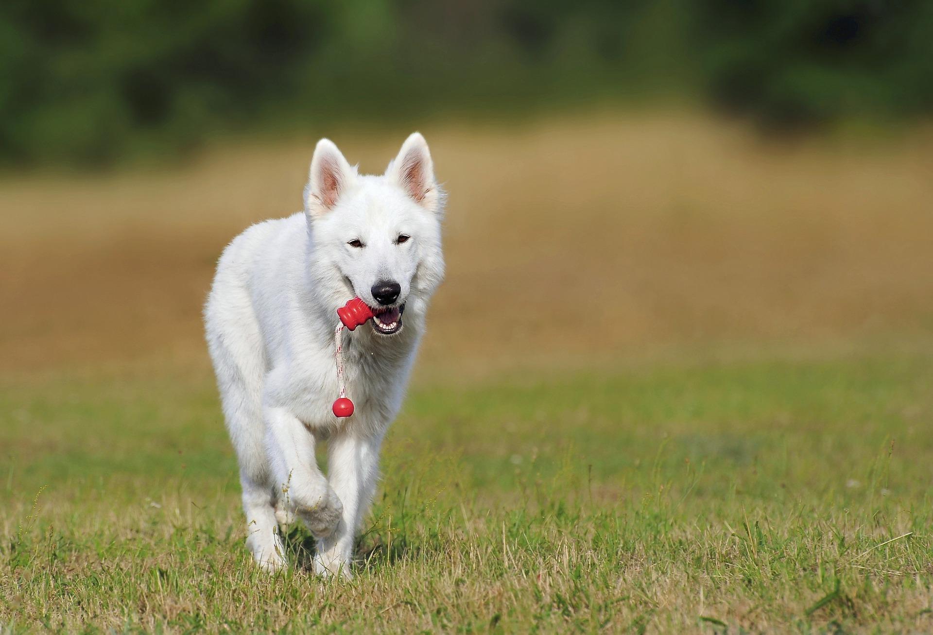 La differenza tra educazione e addestramento del cane