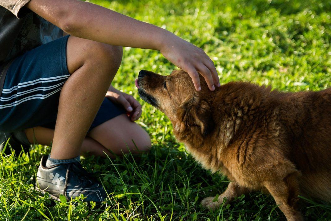 Il primo ospizio per cani che hanno perso il padrone