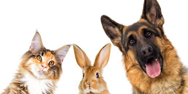Animali d'affezione, un legame costruito nel tempo